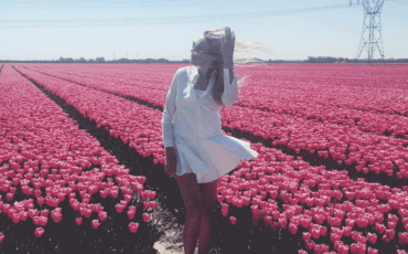 The Dutch Tulip Season