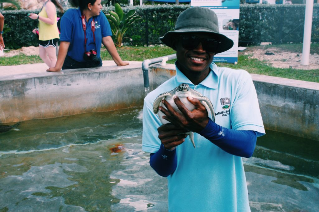 Cayman Turtle Farm - Grand Cayman - The Good Rogue