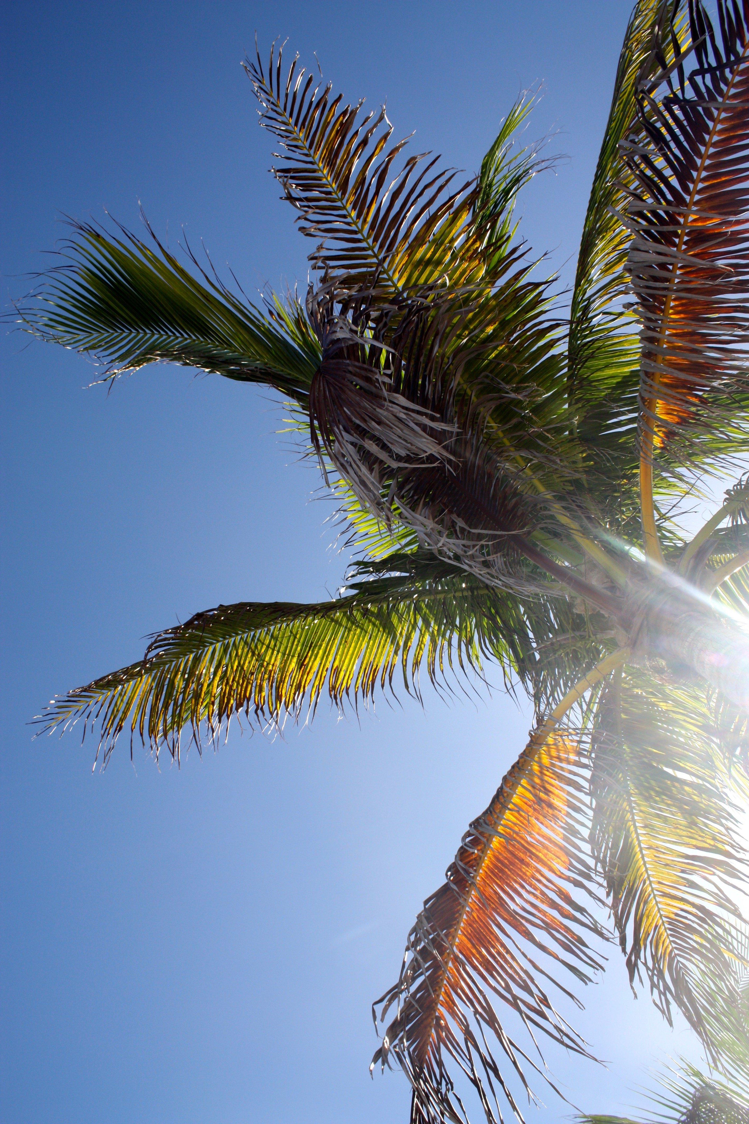 Bahamas - Great Stirrup Cay - The Good Rogue