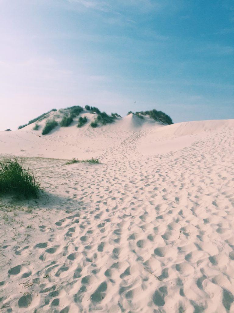 Het Oerd Ameland - World Travel Blog