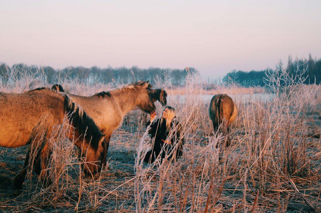 Konik Horse Oostvaardersplassen Lelystad - The Good Rogue