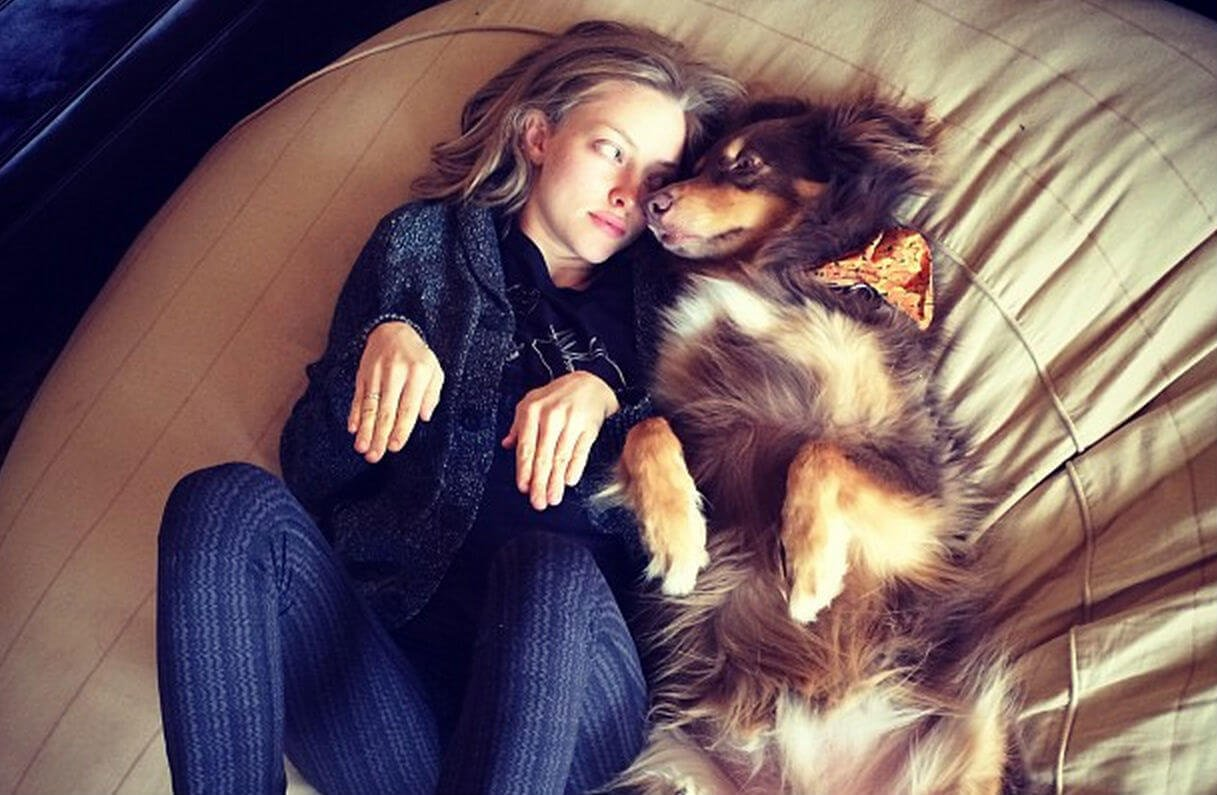 How to Design a Pet-Friendly, Fashionable Home